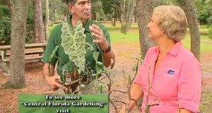 Central Florida Gardening – Two Minute Pests – House Plant Problems