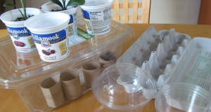 Reusing Toilet Paper Tubes, Food Containers for Seedlings Organic Gardening