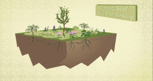 Edible Forest Gardening – Many Rivers Permaculture