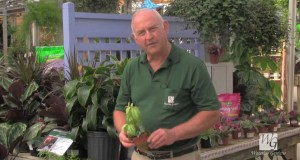 Diagnosing Houseplant Problems on Sunday, October 14, 2012