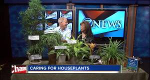 Easy houseplant care