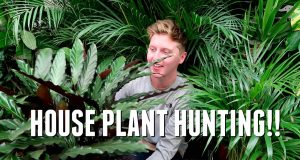 HOUSE PLANT HUNTING!!